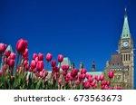 Tulip Festival In Ottawa ...