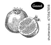 fresh garnet. hand drawn sketch ...   Shutterstock .eps vector #673567858