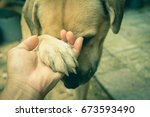 dogs shaking hand with human    Shutterstock . vector #673593490