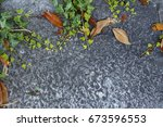 the plant grows on the stone | Shutterstock . vector #673596553