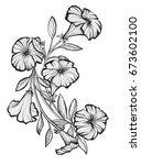 petunias | Shutterstock . vector #673602100