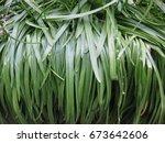 Vertical Long  Thin Green...