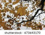 Deep Autumn And The Last Yello...