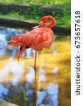 american flamingo bird staying... | Shutterstock . vector #673657618