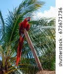 red macaw | Shutterstock . vector #673671736