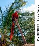 red macaw   Shutterstock . vector #673671736