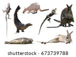 collection of different wild... | Shutterstock . vector #673739788