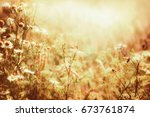 sunny daisies flowers and... | Shutterstock . vector #673761874