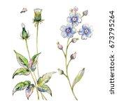 watercolor sketches of wild... | Shutterstock . vector #673795264