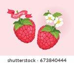 raspberry fruit vector | Shutterstock .eps vector #673840444