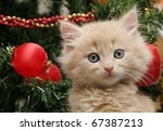 Stock photo cute cream fluffy kitten investigating the decorations on a christmas tree 67387213