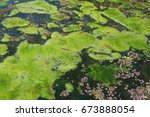 Small photo of GREEN SCUM ON WATER