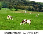 dairy cattle on the meadow in a ... | Shutterstock . vector #673941124