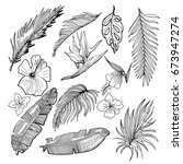hand drawn vector tropical set. ... | Shutterstock .eps vector #673947274
