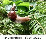 Snail And Green Leaves In...
