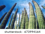 Usa  Arizona  Organ Pipe Cactu...