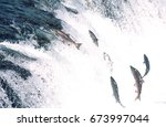 group of salmon jumping... | Shutterstock . vector #673997044