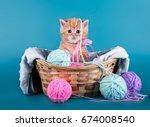 Cute Little Kitten In Basket...