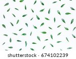 green leaf pattern on white... | Shutterstock . vector #674102239