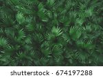 green palm leaf top view... | Shutterstock . vector #674197288