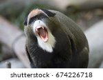 Monkey Screaming