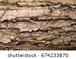 Texture Of The Bark Of Oak....
