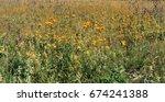 steppe scenery.stepnye wild... | Shutterstock . vector #674241388