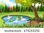 Three Ducks Swimming In The...