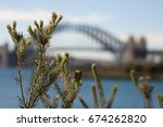 close up of plant fauna against ... | Shutterstock . vector #674262820