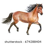 Stock photo beautiful purebred red horse isolated on white background watercolor illustration template 674288404