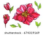 red tropical flowers blossom... | Shutterstock . vector #674319169