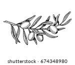 olive branch engraving vector... | Shutterstock .eps vector #674348980