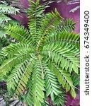 leaf | Shutterstock . vector #674349400