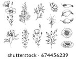 Stock vector vector collection of hand drawn plants botanical set of sketch flowers and branches 674456239