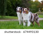 two australian shepherd dogs... | Shutterstock . vector #674493130