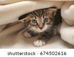 kitten peeping out from under... | Shutterstock . vector #674502616