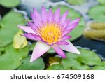 violet lotus and green leafs | Shutterstock . vector #674509168