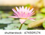 lotus and blurred light. blur... | Shutterstock . vector #674509174
