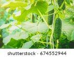 cucumbers grow. selective focus.... | Shutterstock . vector #674552944