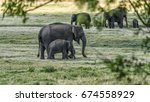Stock photo elephant mother with calf in sri lanka 674558929
