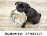 Stock photo funny pug dog bite stainless bowl wait to eat dog food on concrete floor 674559529
