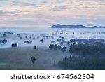 Moring Fog Around Trees Beyond...