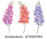 Stock photo watercolor set of delphiniums hand drawn floral illustration bright small flowers isolated on 674587096