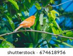 nature | Shutterstock . vector #674618956