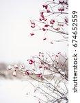 Branches Of Red Viburnum Opulu...
