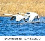 trumpeter swans | Shutterstock . vector #674686570