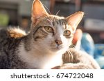 cat looking | Shutterstock . vector #674722048