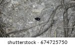 Small photo of A fly on cocreate