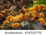 wild mushroom growing on... | Shutterstock . vector #674732770
