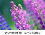 lupinus  lupin  lupine field... | Shutterstock . vector #674746888